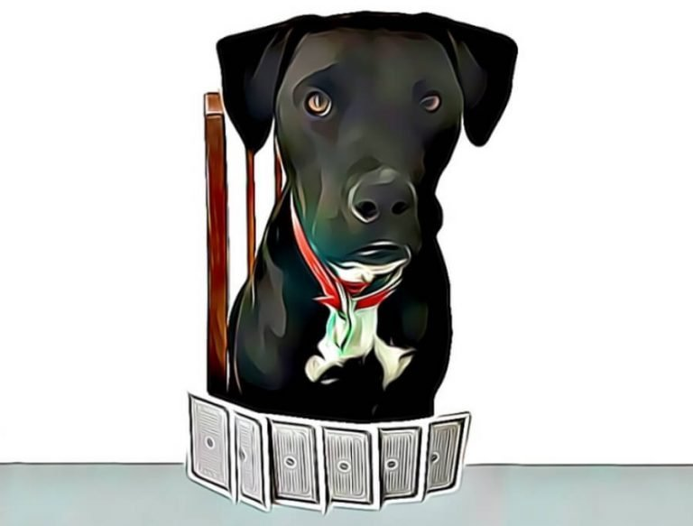 Cartoon photo of Mr Cosmo the dog playing one of his original two player card games