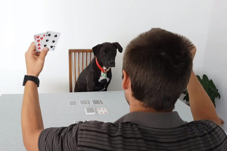 Photo of Mr Cosmo the dog playing a two player card game with his hooman