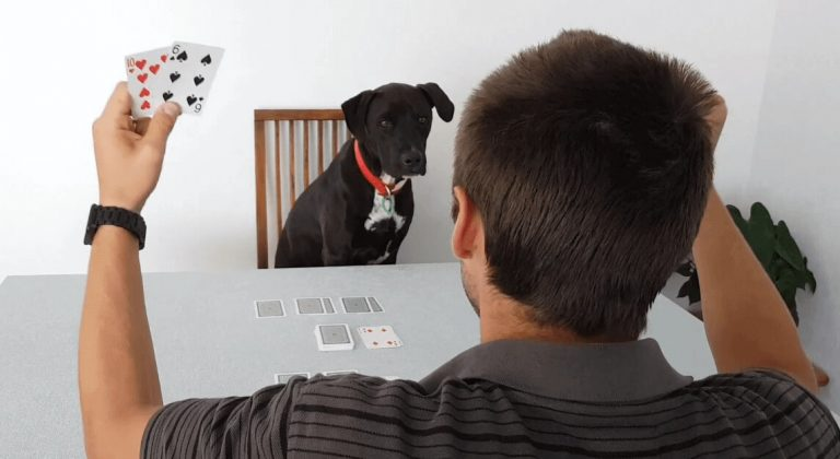 Mr Cosmo the dog playing a two player card game with his hooman